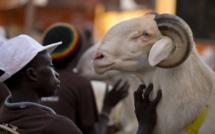 Tabaski 2016 à Saint-Louis : Les besoins en moutons estimés à 155.000 têtes.