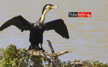ÉCOLOGIE: Dénombrement des Oiseaux d'Eau du Parc du DJOUDJ (Images exclusives)