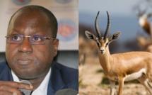 """Abdou Karim Sall sur les gazelles mortes : """" je n'ai rien à me reprocher et je suis vraiment droit dans mes bottes"""""""
