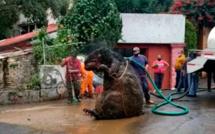 """Un """"rat géant"""" découvert dans les égouts de Mexico City"""
