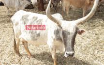 DAGANA : les éleveurs vantent les mérites du projet ASSTEL.